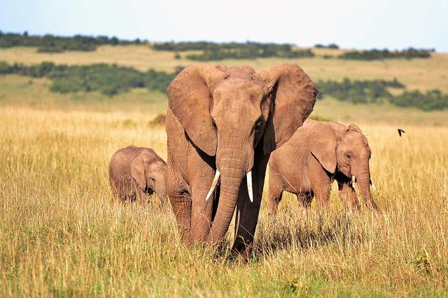 טיול מאורגן לקניה