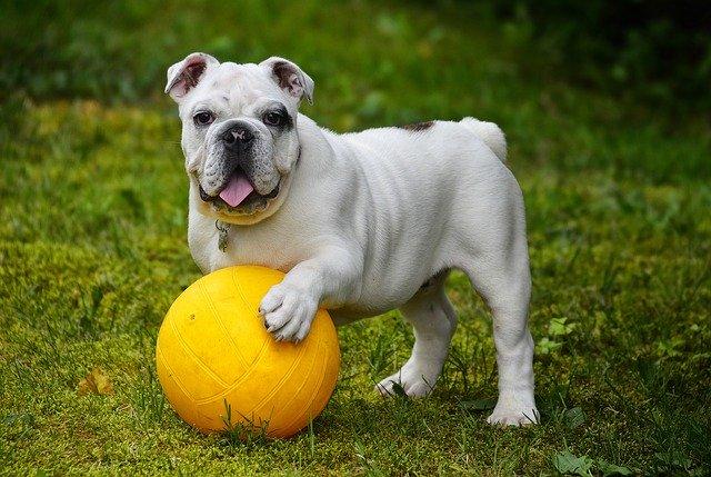 צעצועים לכלב